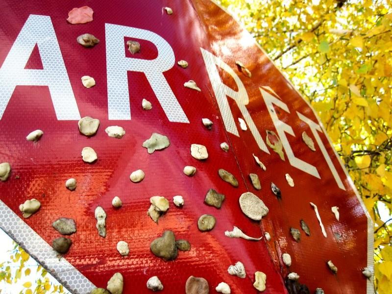Arrêt | © Eve Bisson, 2012, Le monde en image,  CCDM | Coups de coeur du concours intercollégial 2011-2012